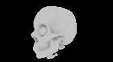 skull-1778818_1280